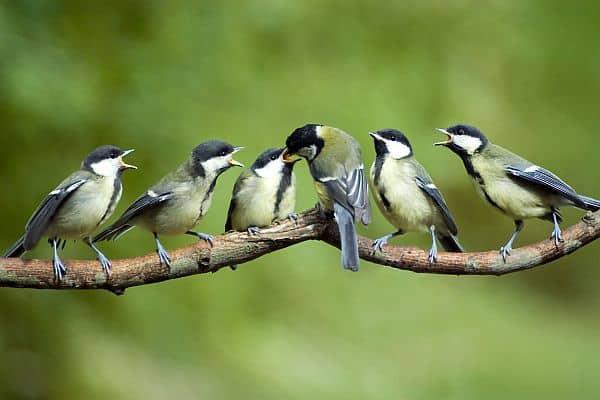 Photo of Wer Gartenvögel ganzjährig artgerecht füttert, unterstützt sie vielfältig