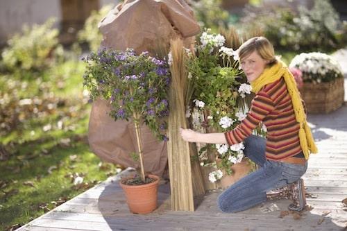 Photo of Winterschutz für Pflanzen, Kübel und Gartenmöbel