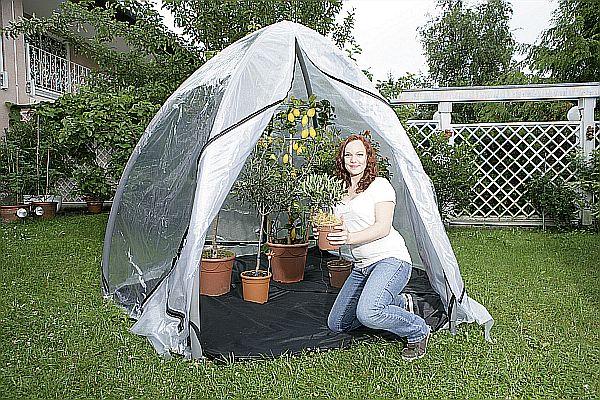 Photo of Mobiles Gewächshaus schützt Kübelpflanzen vor Kälte und Frost