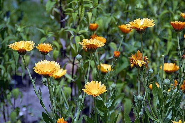 Photo of Ein Duftgarten verwöhnt die Sinne vom Frühjahr bis zum Herbst
