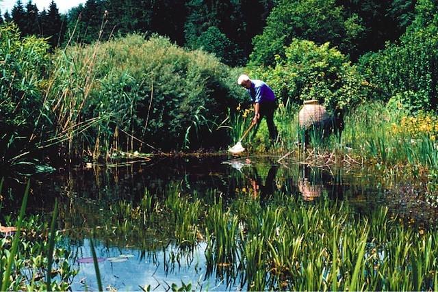 Photo of Für die Pflege des Gartengewässers ist das richtige Timing entscheidend