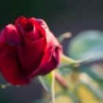 Foto-Quelle: © Tydav Photos - Fotolia.com