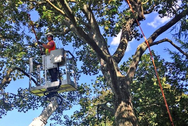 Photo of Laien treffen bei der Baumpflege oftmals falsche Entscheidungen