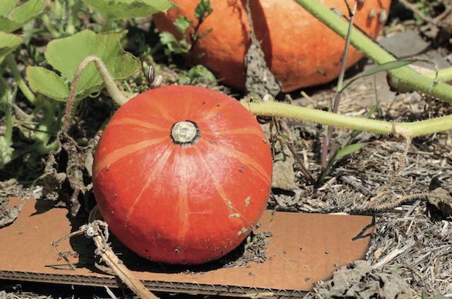 Photo of Umweltfreundliche Gartenhelfer – Erntespaß und Pflanzenglück mit Wellpappe