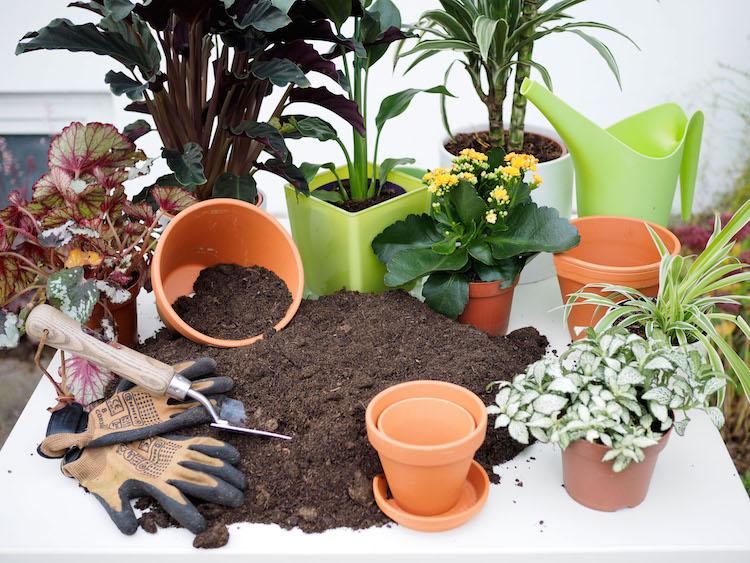 Photo of Nach dem Winter umtopfen und die Basis für kräftiges Pflanzenwachstum schaffen