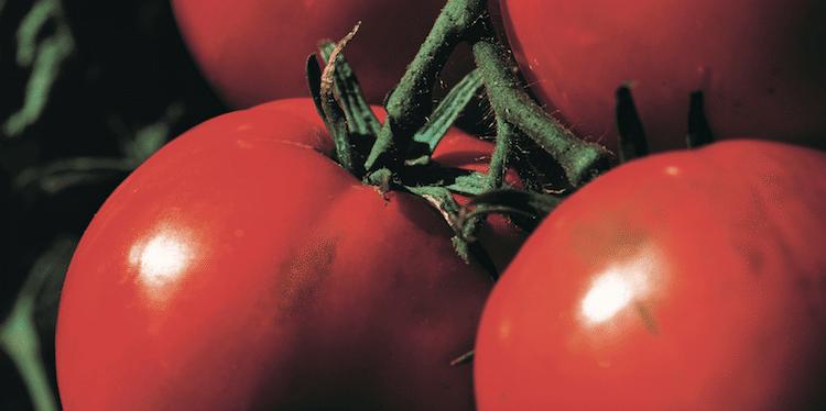 Photo of Die richtige Düngeformel für jede Pflanze
