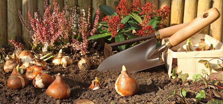 Photo of Pflanzenpflege hat Hochsaison im Herbst