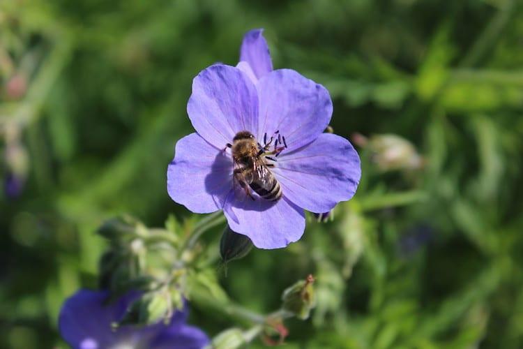 Photo of Dem Bienensterben entgegenwirken
