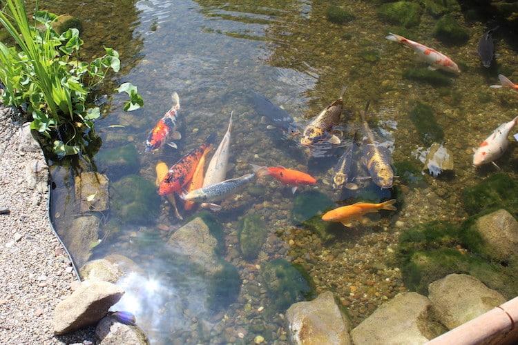 Photo of Ein Teich im eigenen Garten – Das müssen Sie beachten