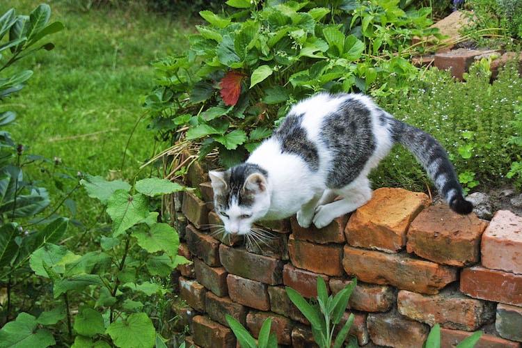 Photo of Samtpfoten stehen nicht nur auf Katzenminze