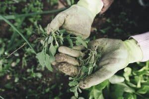 Bevor eine neue Hecke gepflanzt wird, sollte unter anderem die Bodenbeschaffenheit geprüft werden.