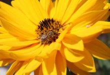 Photo of Bienenfreundliche Gärten mit den richtigen Pflanzen