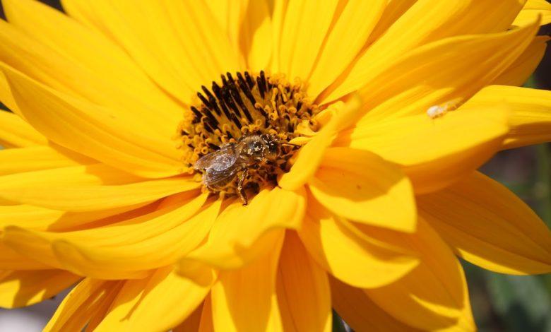 Mit den richtigen Pflanzen finden Insekten das ganze Jahr über Nahrung