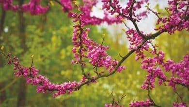 Photo of Richtige Pflanzzeit von Bäumen und Sträuchern