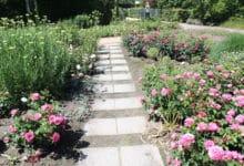 Photo of Die nächste Hitzeperiode kommt – So schützen Sie Ihren Garten