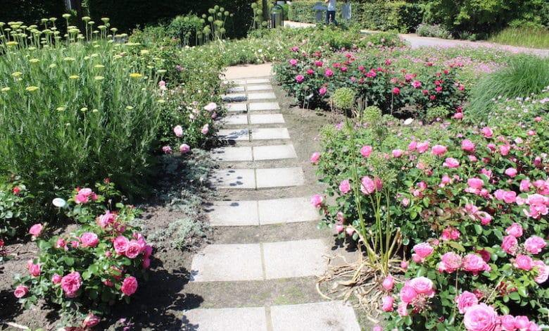 Den Garten vor der nächsten Sommerhitze richtig schützen