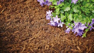 Photo of Mulchen – Warum Sie Ihre Beete mulchen sollten