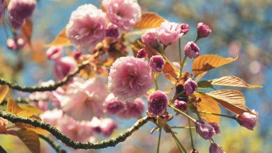 Photo of Sicht- und Sonnenschutz mit schnell wachsenden Bäume und Sträucher