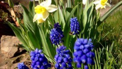 Photo of Blumenzwiebeln machen Ihren Garten zum Fest
