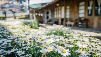 Photo of Haus und Garten – ein Projekt in zwei Etappen oder doch lieber zeitgleich?