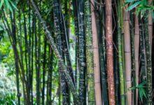 Photo of Bambusprodukte aller Art sind in Haus und Garten beliebter denn je